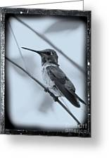 Hummingbird With Old-fashioned Frame 1 Greeting Card