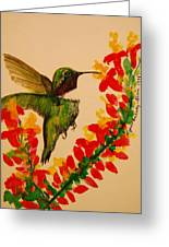 Hummingbird With Red Flowers Greeting Card