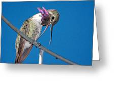 Hummingbird Yawn With Tongue Greeting Card