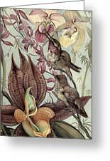 Hummingbirds And Orchids Greeting Card
