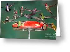 Hummingbirds Greeting Card