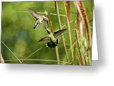 Hummingbirds In Fight Greeting Card