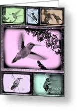 Hummingbirds In Old Frames Collage Greeting Card