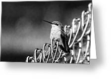 Hummy On Fence B And W Greeting Card