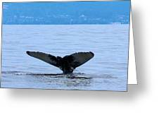 Humpback In Monterey Greeting Card