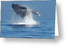 Humpback Whale Breaching Greeting Card by Bob Christopher