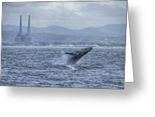 Humpback Whale Breaching By Shane Keena  Greeting Card