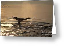 Humpback Whale Feeding Greeting Card