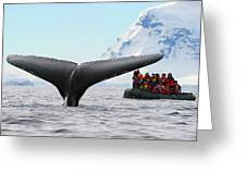 Humpback Whale Fluke  Greeting Card by Tony Beck