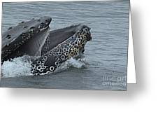 Humpback Whale  Lunge Feeding 2013 In Monterey Bay Greeting Card