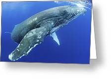 Humpback Whale Near Surface Greeting Card