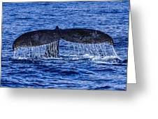 Humpback Whale Tail Fluke During Deep Dive Greeting Card by Puget  Exposure