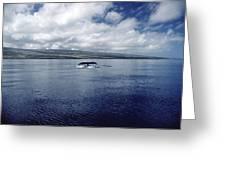Humpback Whale Tail Slap Hawaii Greeting Card