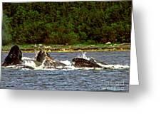 Humpback Whales Feeding Greeting Card