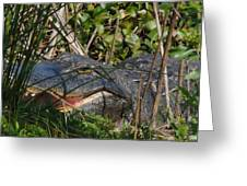 Hungry Alligator Greeting Card