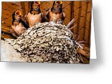 Hungry Baby Swallows - Antelope Island - Utah Greeting Card by Gary Whitton