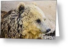 Hungry Bear Greeting Card