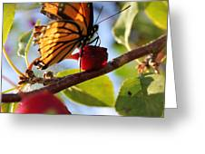 Butterfly And The Cherry Greeting Card