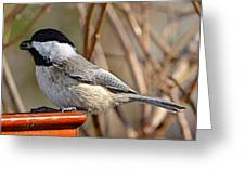 Hungry Chickadee  Greeting Card