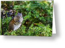 Hungry Chipmunk  Greeting Card
