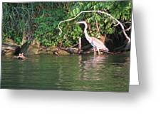 Hungry Crane Greeting Card