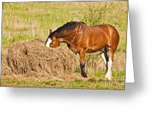Hungry Horse Greeting Card
