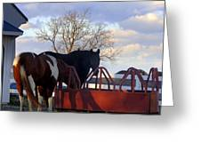 Hungry Horses Greeting Card