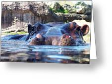Hungry Hungry Hippo Greeting Card