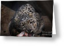 Hungry Leopard Greeting Card