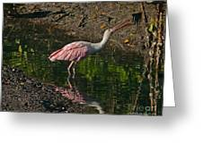 Hungry Pink Spoonbill Greeting Card