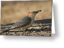 Hungry Red-bellied Woodpecker - Melanerpes Carolinus Greeting Card