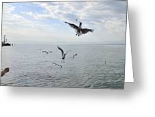 Hungry Seagulls Flying In The Air Greeting Card