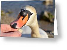 Hungry Swan Greeting Card