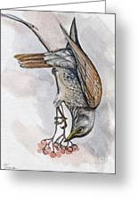 hungry Thrush 1 Greeting Card