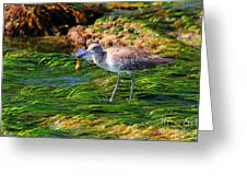 Hungry Willet Greeting Card