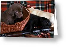 Hunters Puppy Dreams Greeting Card