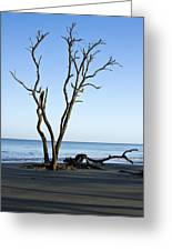 Hunting Island Graveyard Greeting Card