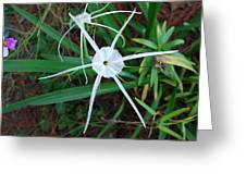 Hurricane Lilly Greeting Card