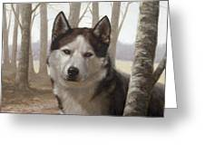 Husky In The Woods Greeting Card