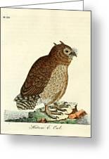 Hutum Owl  Greeting Card