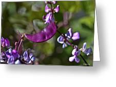 Hyacinth Bean Greeting Card