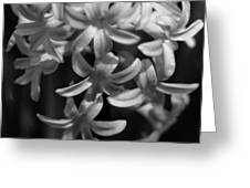 Hyacinth In Black And White Greeting Card