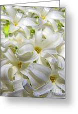 Hyacinth Love 3 Greeting Card