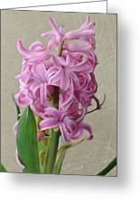 Hyacinth Pink Greeting Card