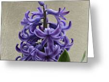 Hyacinth Purple Greeting Card