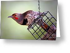 Intergrade Red Shafted And Yellow Shafted Northern Flicker Male Greeting Card