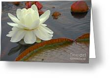 Hybrid Water Platter Day One Greeting Card