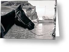 Hydra Horse Greeting Card