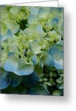Hydrangea 2 Greeting Card