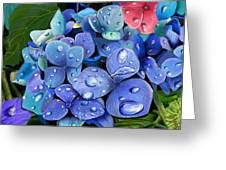 Hydrangea Drift  Greeting Card